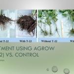 fertilizer application in oil palm plantation