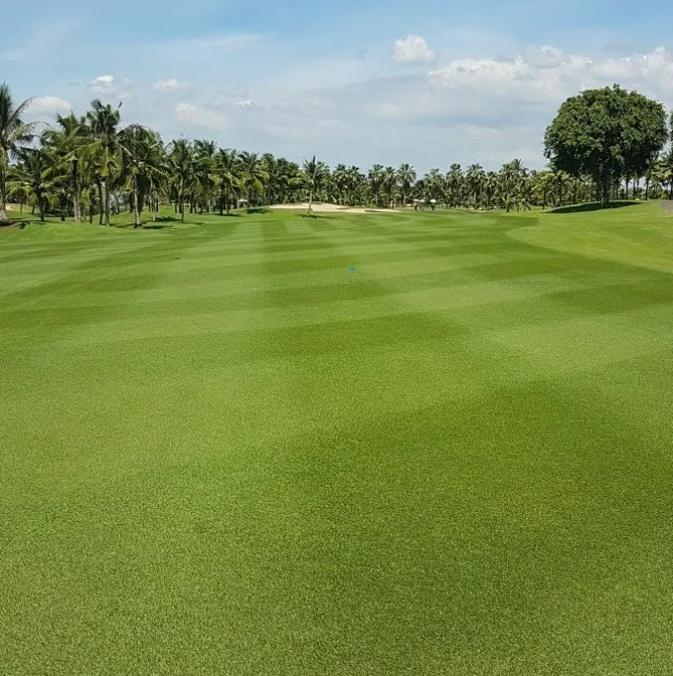 organic golf grass